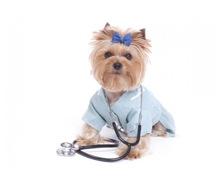 Six ways your pet can boost health and well-being http://www.medicalnewstoday.com/articles/317738.php?utm_campaign=crowdfire&utm_content=crowdfire&utm_medium=social&utm_source=pinterest