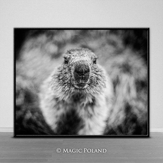 Marmot Printable Digital Download Digital Prints Instant