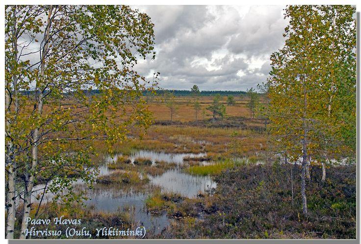 Hirvisuo ('Moose swamp') Oulu - Yli-Kiiminki 2010 - Photo: Paavo Havas