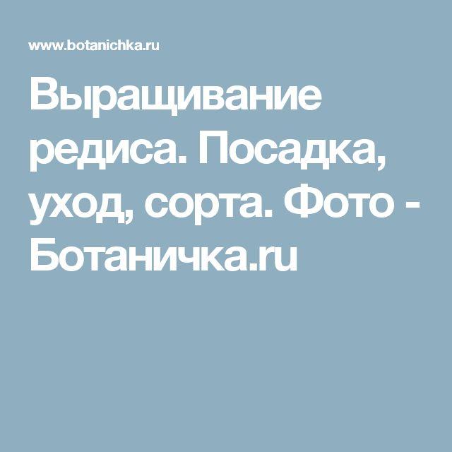 Выращивание редиса. Посадка, уход, сорта. Фото - Ботаничка.ru