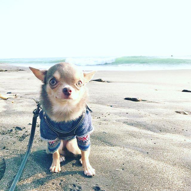 カフェの後はぶらぶらしながら七里ヶ浜から海辺へ降りてみたよ! 🐾  満潮だったのか、かなり波が近くまで迫って来てた中、ウェディングドレスの花嫁さんが撮影してた!が、突如の波でドレスがぁ〜〜〜😱 見てたこっちが思わず悲鳴が出そうでした💦