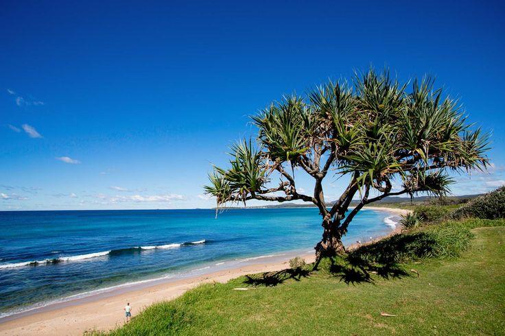 Corrindi beach. 3hr dog friendly