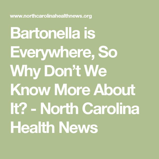 Bartonella is Everywhere, So Why Don't We Know More About It? - North Carolina Health News
