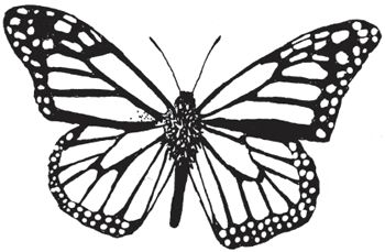 22 best events images on pinterest events happenings for Monarch butterfly coloring page