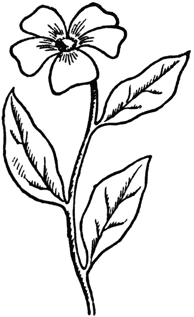 flower drawing drawings simple easy coloring adults pages