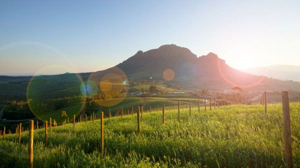 Sunrise at Delaire #wine estate in South Africa...