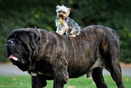 large dogs photos