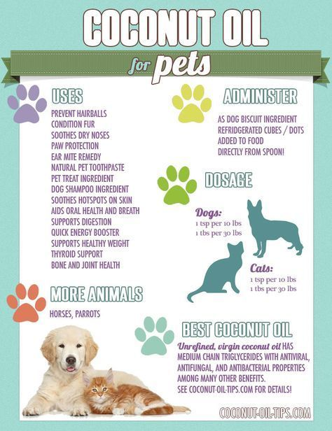 Coconut Oil for Pets: Uses, Benefits, and Tips! - Coconut Oil Tips #cat health