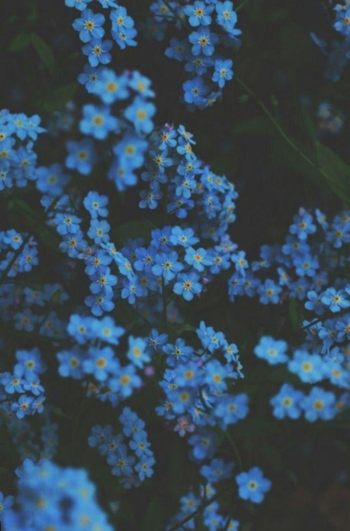 Cute Aesthetic Pictures Blue Miniensaio Miniensaiodiadascriancas Candy Blue Flower Wallpaper Flower Aesthetic Blue Aesthetic