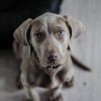 #dogalize La sterilizzazione del cane: tutte le informazioni #dogs #cats #pets