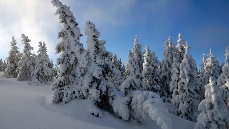 Mycket snö i naturen
