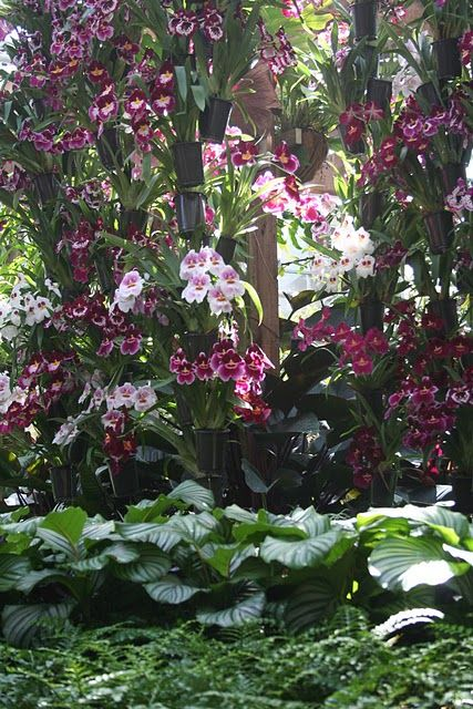 """hanging orchids---I want to be a """"rainforest gardener""""!!   :] :]  things that make me smile!!"""