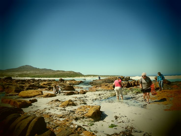 Coastal Foraging Cape Town