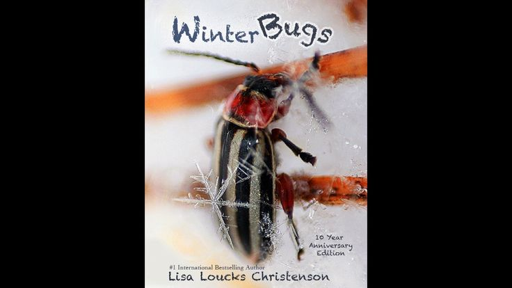 Winter Bugs 10 Year Anniversary Edition 1080p 2