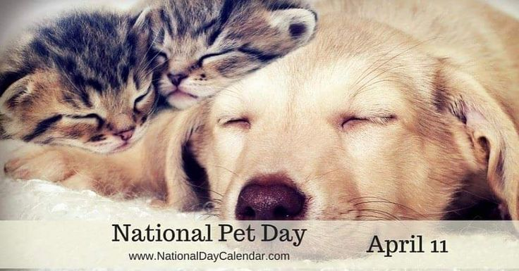 #NationalPetDay. Today is National Pet Day. Give your pets a big hug but you can also help those animals in our shelter who don't have homes and could use a little something today to give them comfort. If you live close to the Moreno Valley shelter they would very much appreciate blankets canned kitten food and powdered kitten formula litter boxes kitty litter plastic carrying totes cat toys and kitten nursing kits for kitten foster homes. You can drop off items at 14041 Elsworth Street…