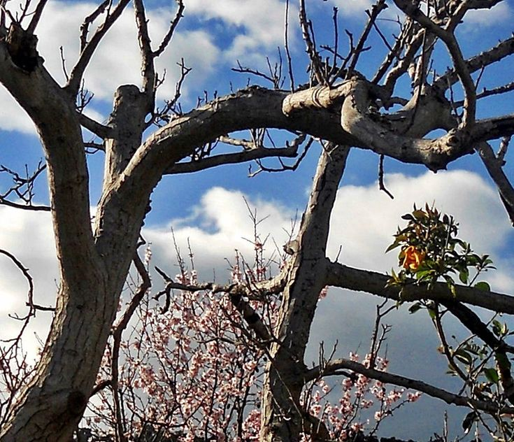 First trees in bloom by marilenavaccarini