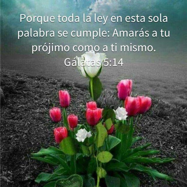 Amor Al Prójimo Siempre Gudelia Santana Frases De Sabiduria Frases Motivadoras De Amor Frases Biblicas Motivadoras