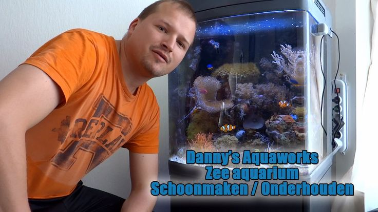 10 best images about Zee aquarium video u0026#39;s on Pinterest   Words, Tes and Videos