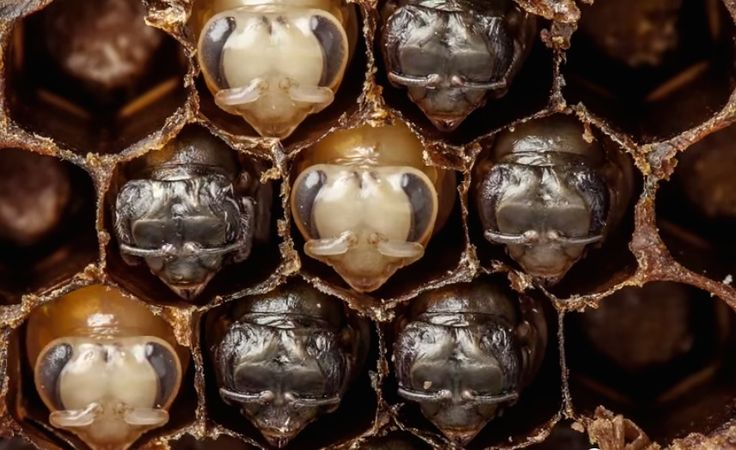 From egg to buzzing pollinator, a photographer captures the secret life of bees and it's nothing short of a wonder.
