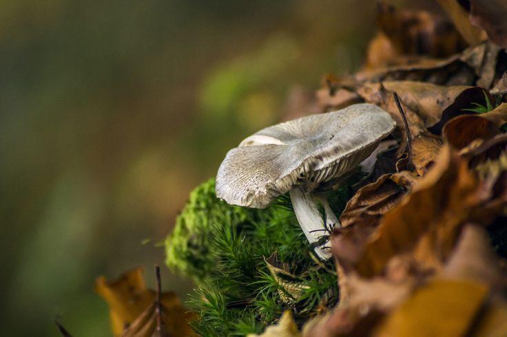 Mushroom by István Sady on 500px