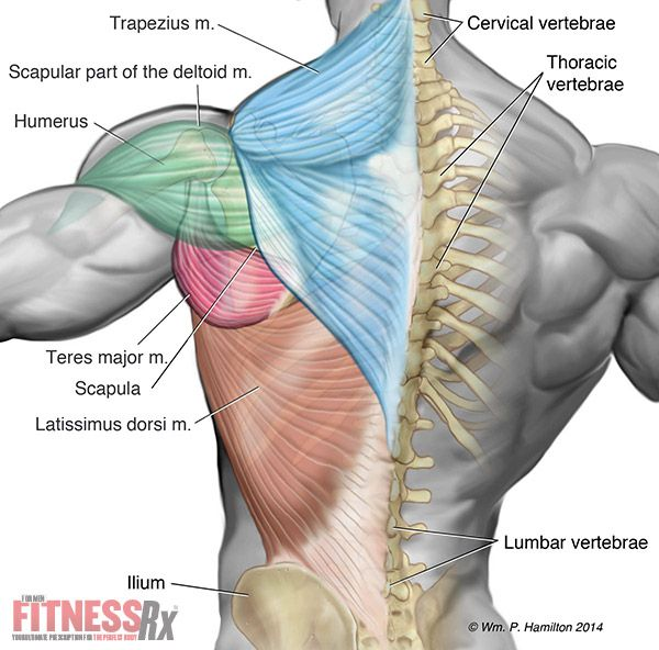 35 best SHOULDER BACK | FITNEES images on Pinterest
