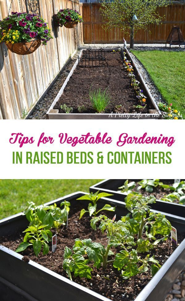 Vegetable Gardening In Raised Beds Containers Vegetable Garden