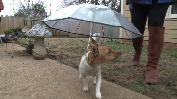 This ridiculously cute dog umbrella is ridiculously useless…