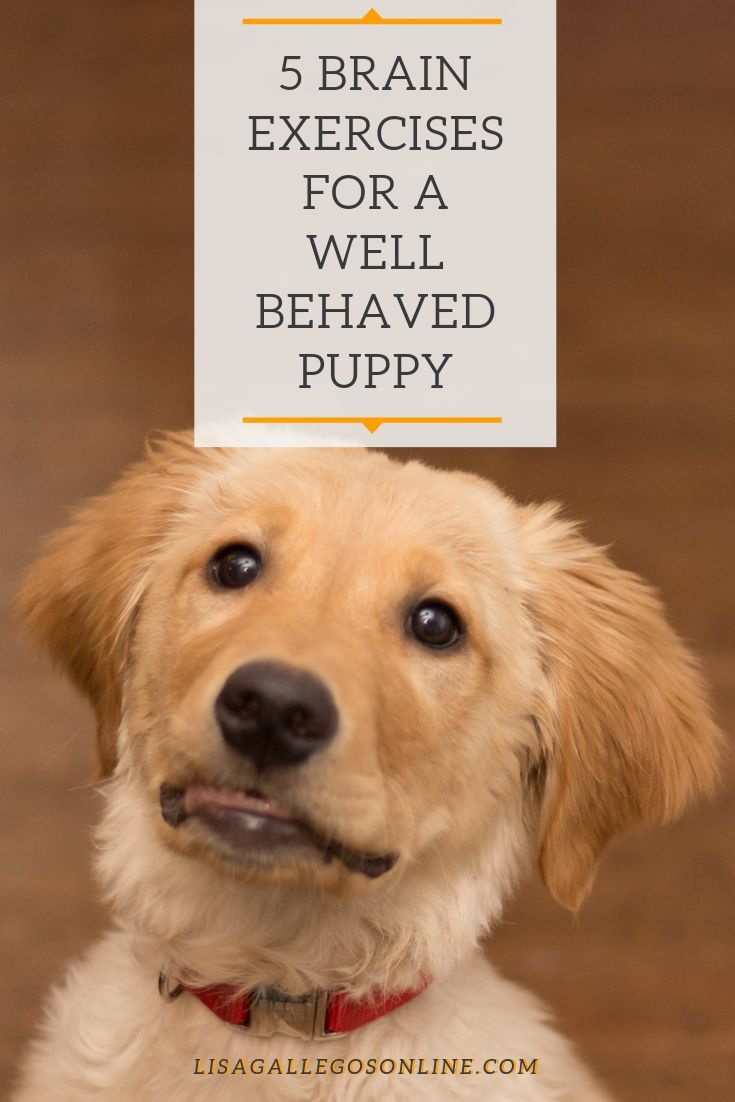 Dog Mental Exercise 5 Brain Exercises For A Well Behaved Pup