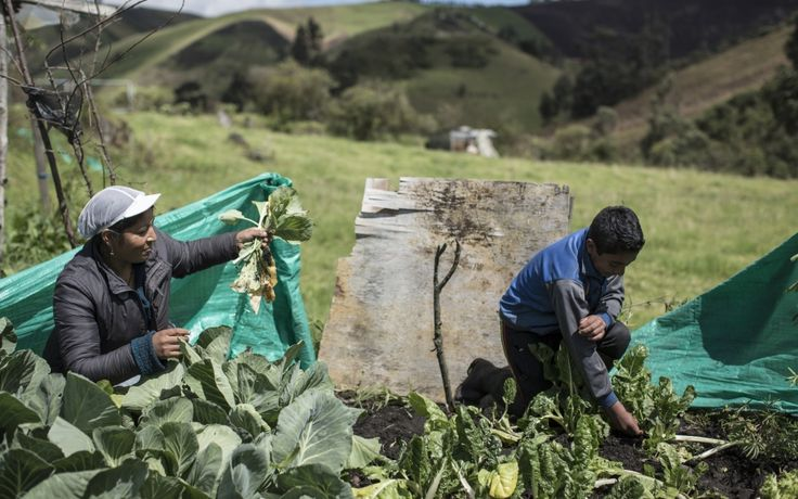 This woman, a Colombian refugees in Ecuador, is part of an EU-funded smallholder farmer association. She sells her produce at local markets, where refugees receive assistance via electronic card. (15 October 2014, Photo: World Food Programme/Chris Terry, supported by the EU)
