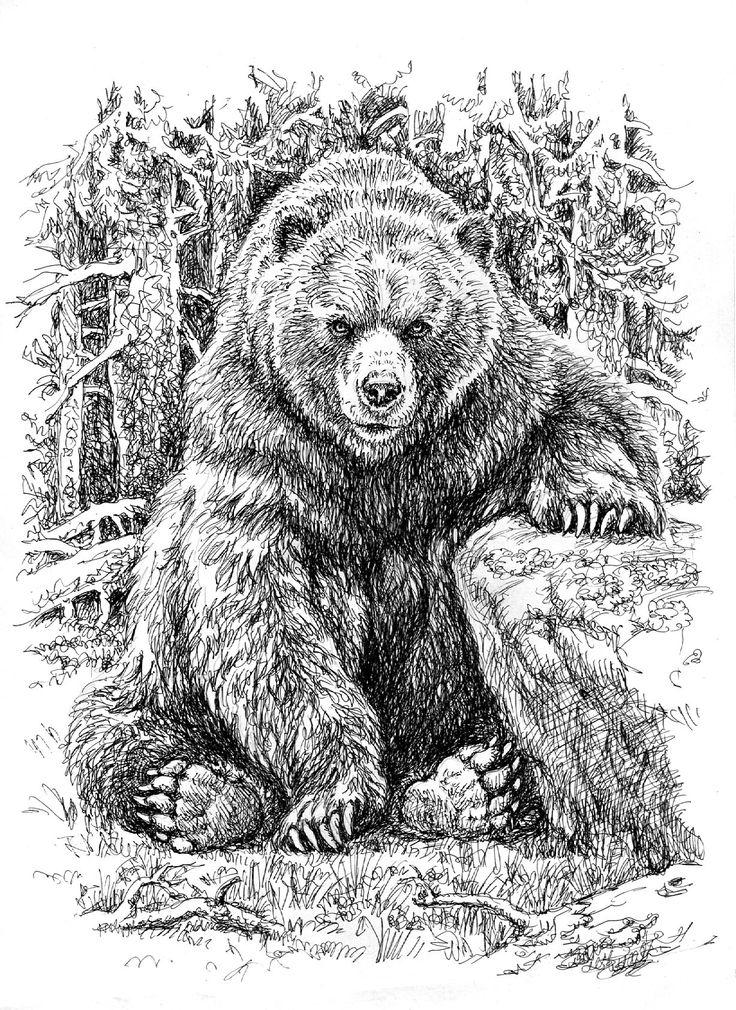 Рисунки картинки медведя
