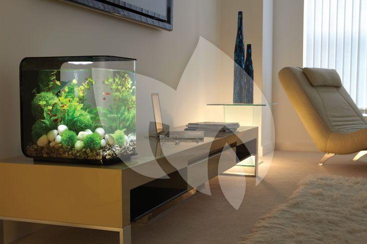 BiOrb is hét moderne aquarium. Met mooie, strakke vormgegeven aquaria hebben zij ervoor gezorgd dat u een eyecatcher in huis haalt!  #BiOrb #aquarium #modern #vissen #rustgevend