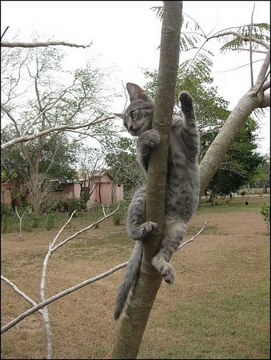 yes I am a cat and I can climb trees, and wave at the same time