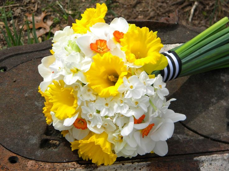 Spring wedding bouquet with daffodils. Flowers of Charlotte loves this!  Find us at www.charlotteweddingflorist.com