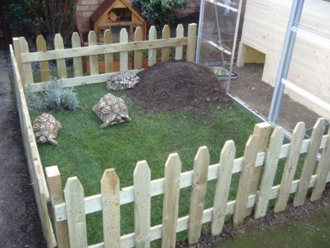 Tortoise Table - Tortoise Tables, Tortoise Table, Tortoise House - lovely garden gate!