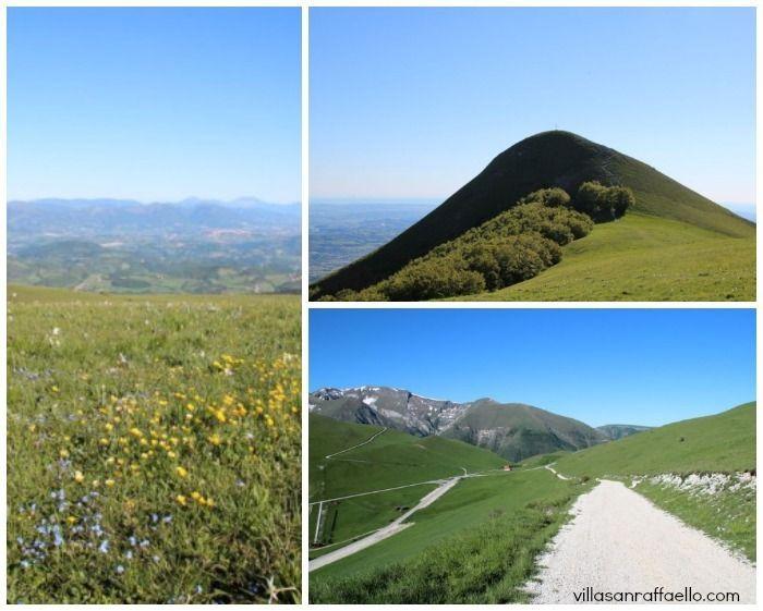 Sibillini mountain wild flower  bird | Le Marche Walk at Piani di Ragnolo