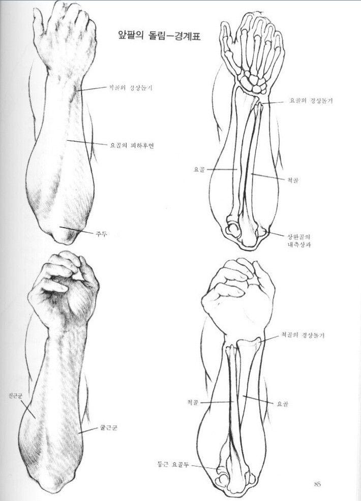 Mejores 435 imágenes de Fractura en Pinterest | Anatomía, Enfermería ...