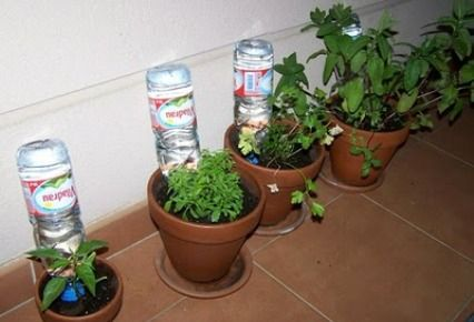 regar las plantas en vacaciones, consejos florales, rosa valls formació, arte floral
