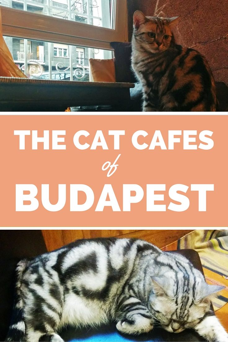Budapest, Hungary | Two cat cafes to explore.