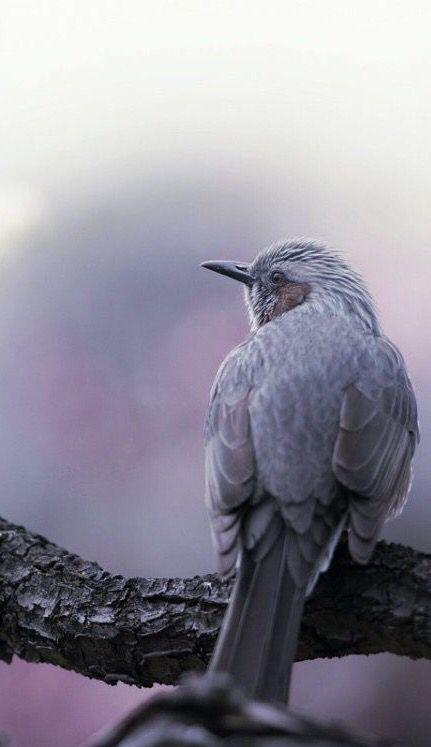 lavender bird ✿⊱╮