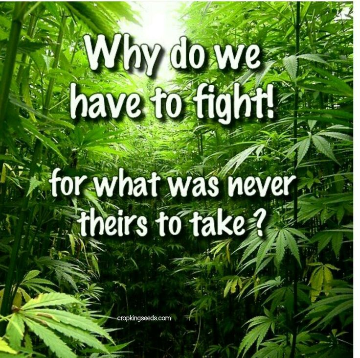 Weed Plantation, Weed Love, Weed Life !!!