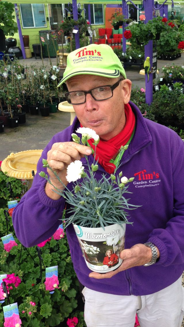 Dianthus 'memories'. Phenomenal fragrance, tough, versatile, and raises money for a worthy cause! Proceeds from the sale go to dementia research.