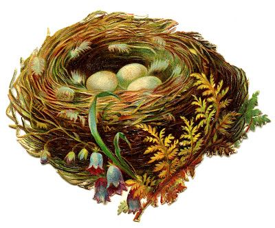 Vintage Graphic - Pretty Nest with Eggs - 2 - The Graphics Fairy