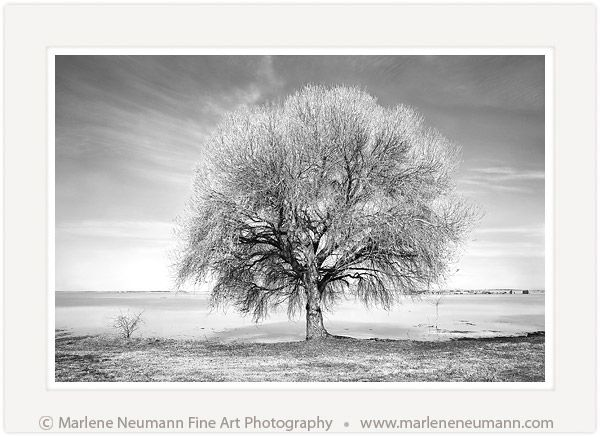 Winter tree black and white fine art photography by south african master photographer