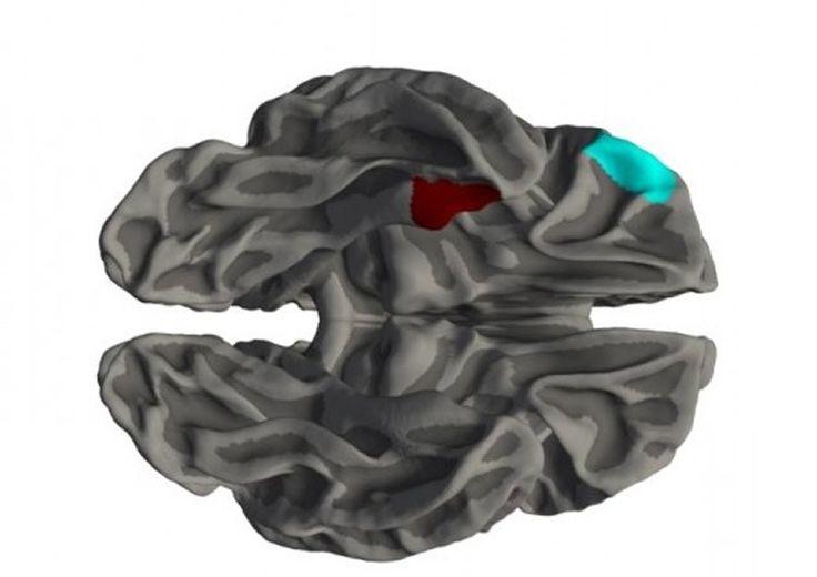 مطالب مرتبط:اتیسم چگونه مغز را تغییر می دهد؟۱۰ ویژگی که صورتتان در مورد شما آشکار می کندکودکانی که با نادر ترین بیماری های دنیا زندگی می…میشود بدون مغز هم زندگی کرد؟ مغز؛ بودن یا نبودن؟اخبار همایشهای علوم اعصاباختیار توهم است؟