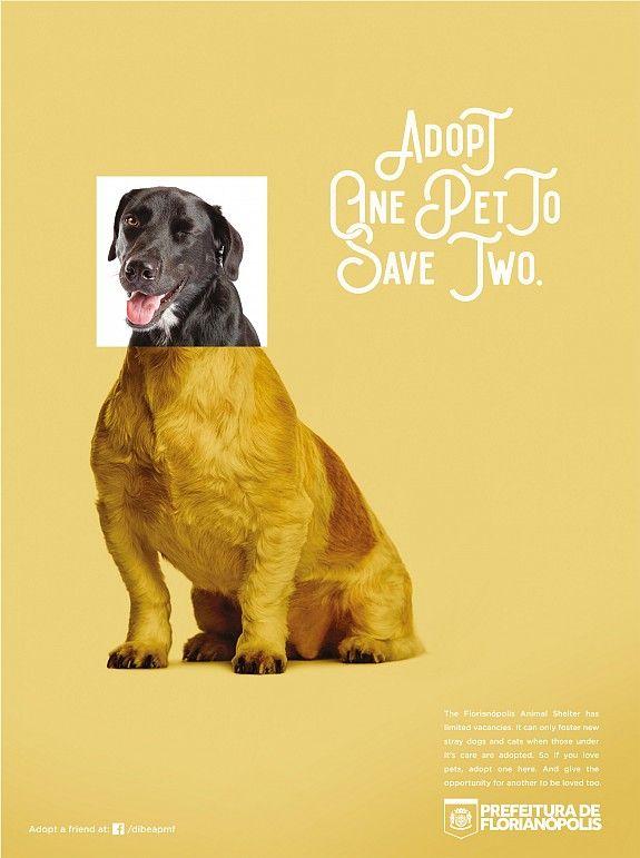 Print Ad City Of Florianopolis Pets Pet Advertising Pets Adoption