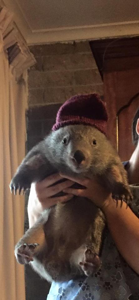 wombat beanie                                                                                                                                                                                 More