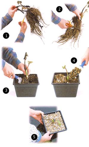 How to Plant in Water Features