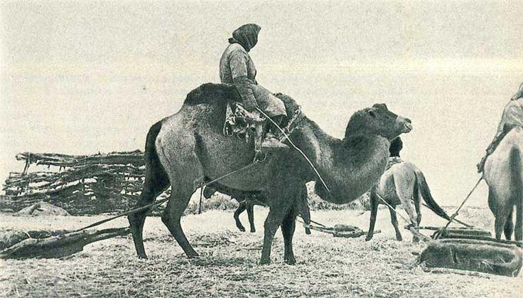 Оседлоземледельческая культура казахов, орошение земель, выращивание, посевы, растили, высеивать, земледелие, фото, картинки