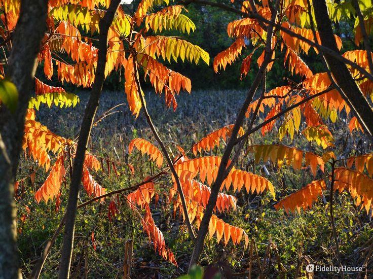 La foto, scattata in controluce, racconta i colori dell'autunno in Veneto.