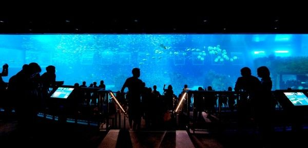 Marine Life Park's S.E.A. Aquarium is in the Guinness World Records!